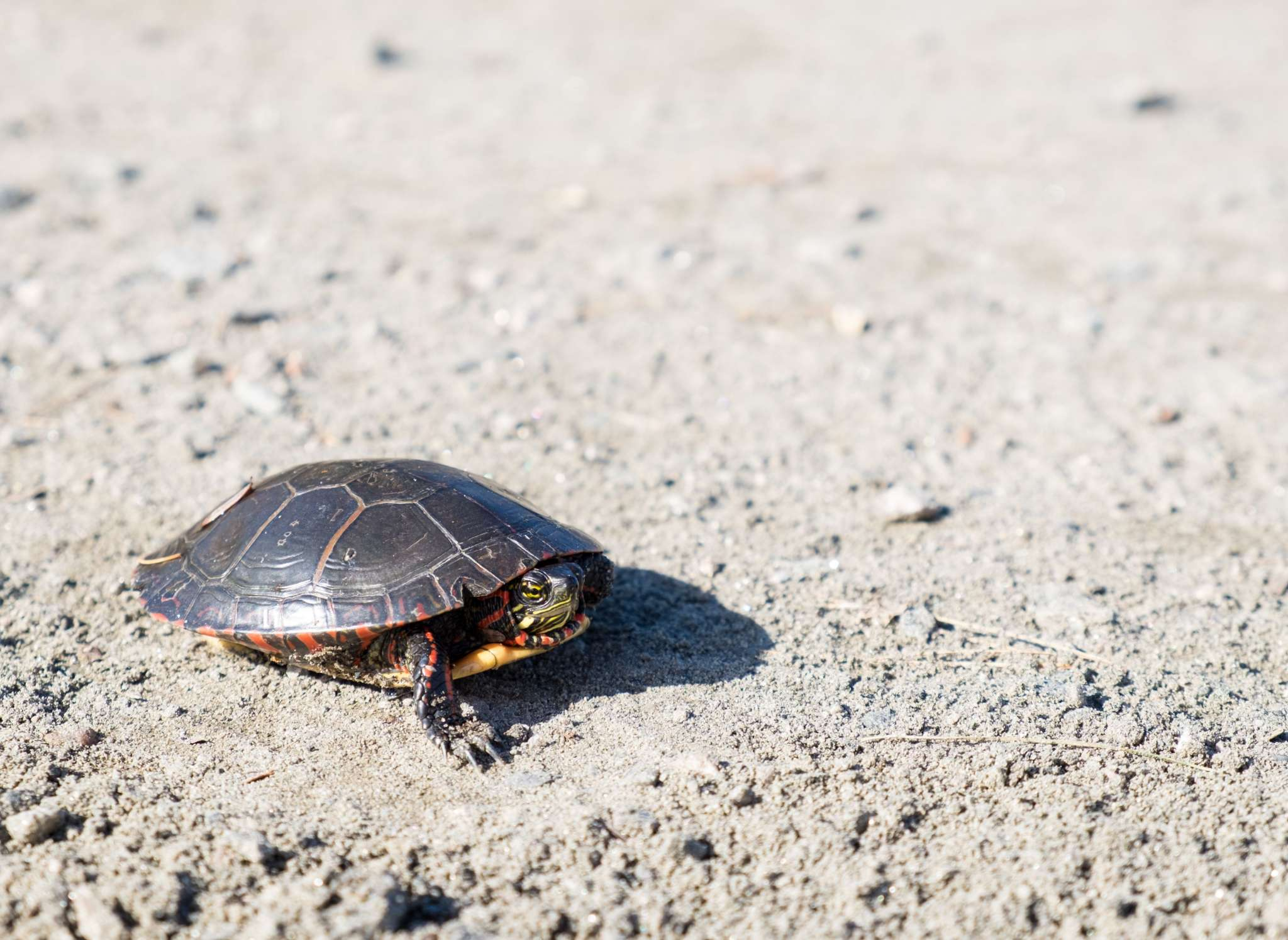 Content Marketing At Turtle Speed